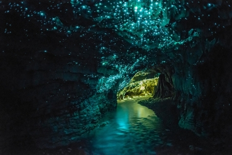 Glow-worm-cave-new-zealand