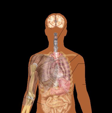Symptoms_of_ebola