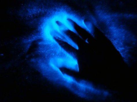 Bioluminescence-in-Human-Lafline