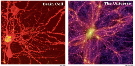braincell-universe