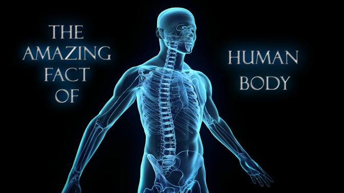 Human Body Amazing Fact