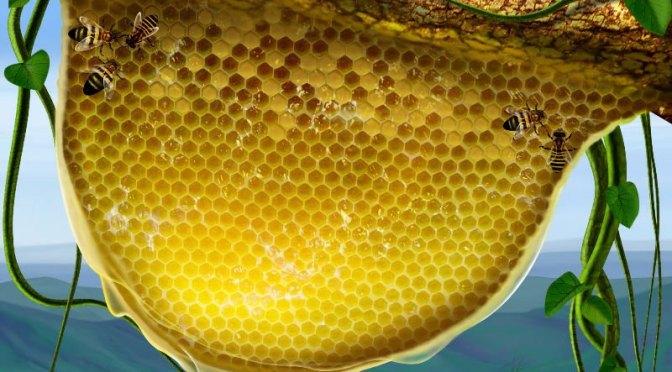 7 Benefit Of Pure Honey